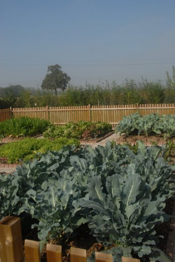 Giardino di campagna (2011-2012)