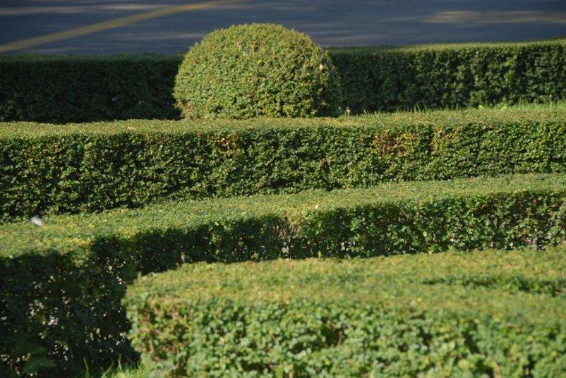 Progetto di Restauro del giardino