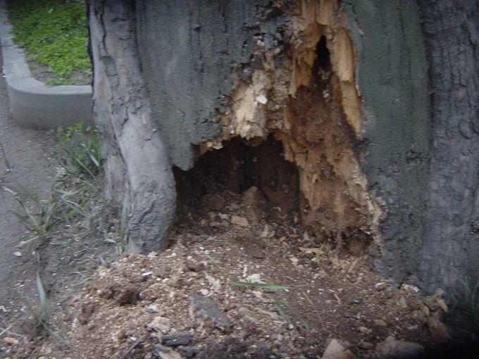Analisi della stabilita: le carie degli alberi